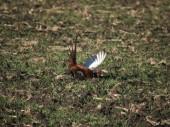 Zrušenie opatrení vydaných v súvislosti s výskytom vtáčej chrípky