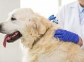 Očkovanie psov proti besnote dňa 20. 6. 2020