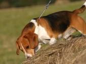 Výzva pre  majiteľov psov