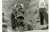 Horné Orešany  prvá žatva 1957
