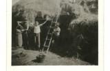 Mlátenie obilia - stavanie stohov zo slamy, 1950